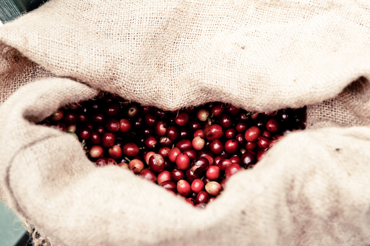Haessig-und-Haessig-Strawberry-Candy-Kaffee-aus-Äthiopien-20
